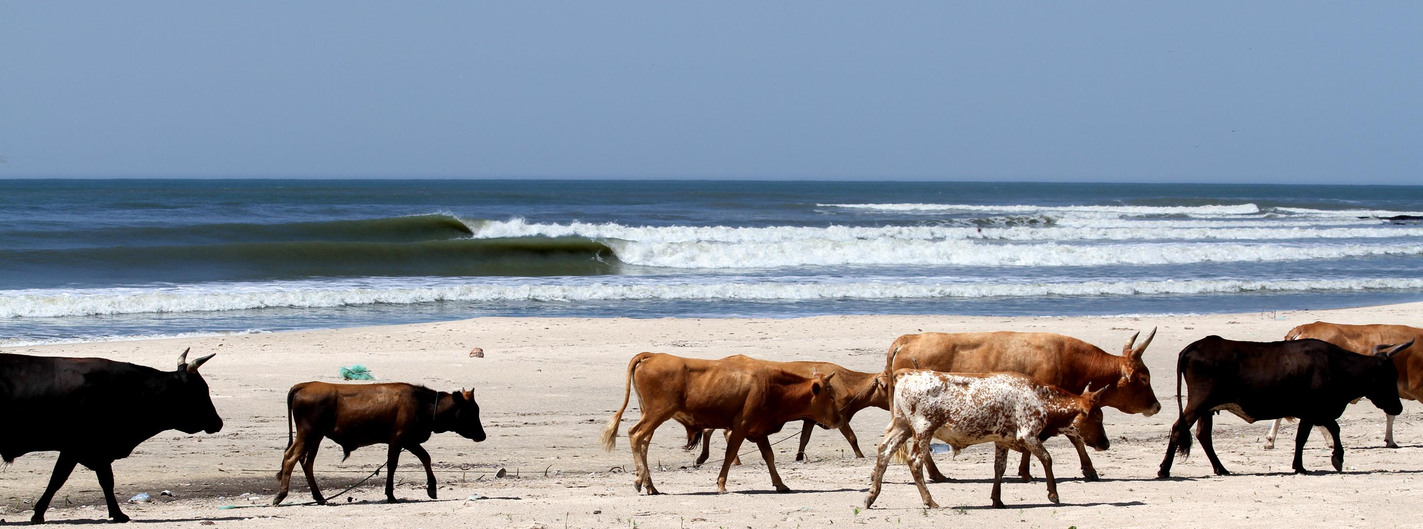 en el paquete surfari vamos a olas como estas.